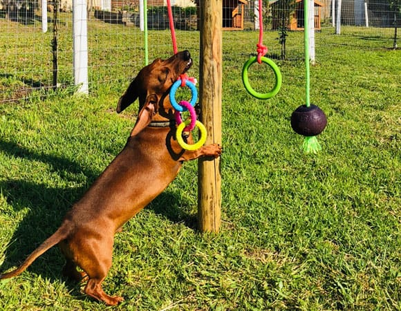 doggy daycare southern suburbs