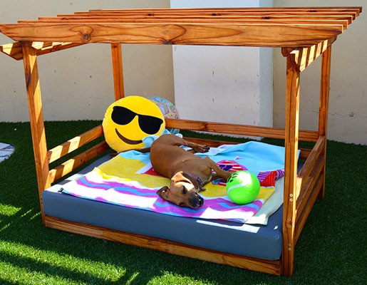doggy daybeds cape town