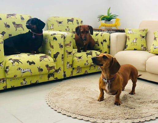 dog hotel facilities