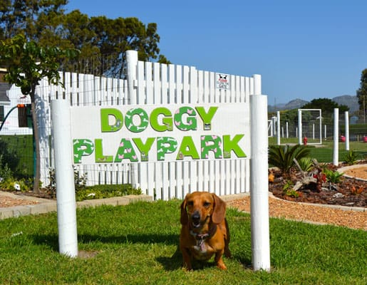 doggy daycare south peninsula cape town